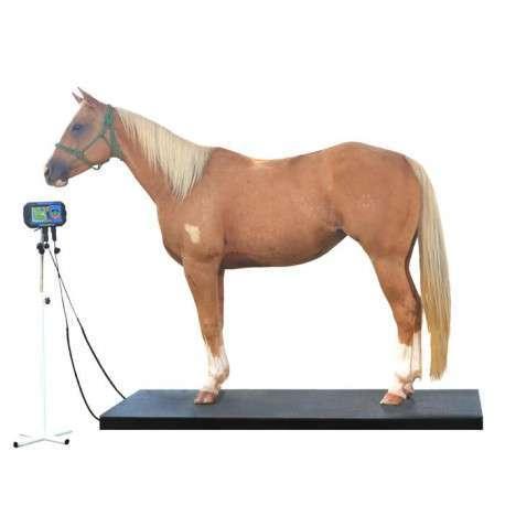 Balança Digital Veterinária Para Equinos